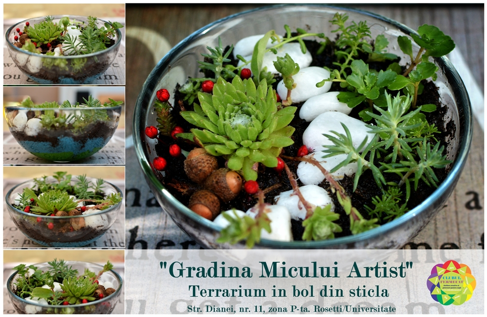 Eveniment 11.06.2017 - Terrarium in bol din sticla